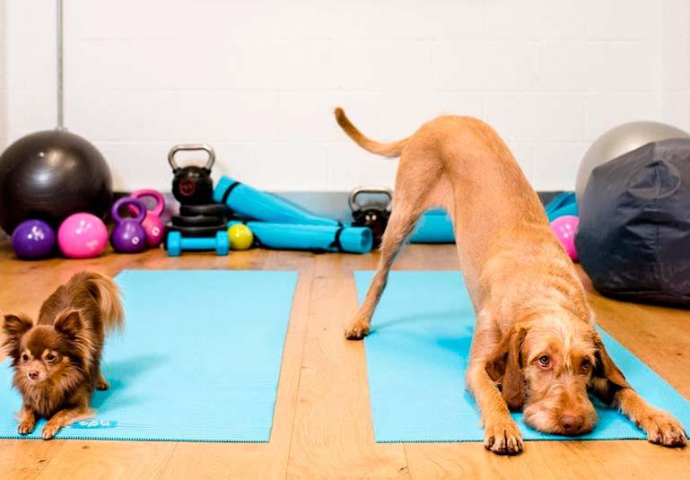 Фитнес для собак